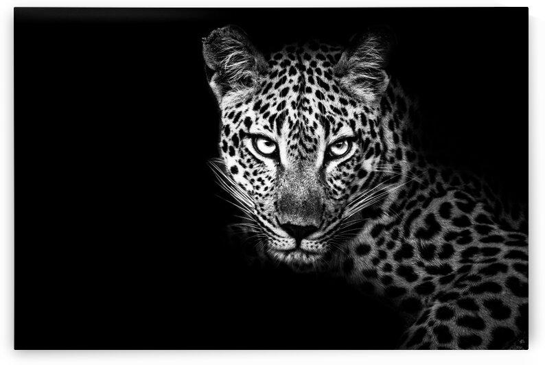 Leopard Eyes by Bill Sewell