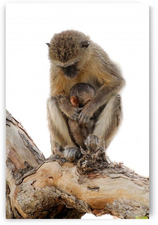 Monkey & Mom by Bill Sewell