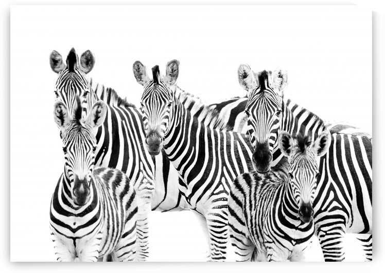 Zebra Cluster by Bill Sewell