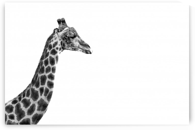 Giraffe Edge by Bill Sewell