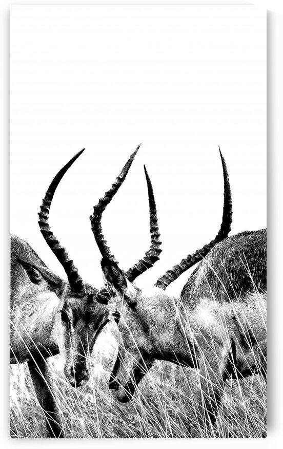 Impala by Bill Sewell