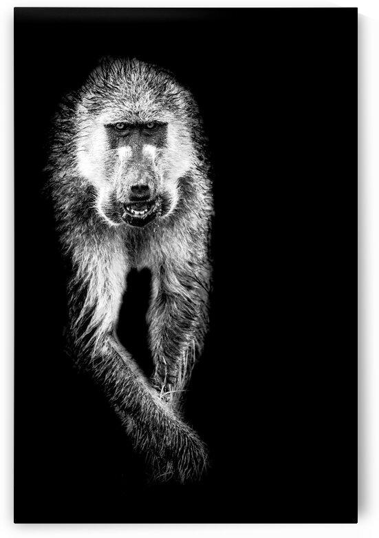 Monkey by Bill Sewell