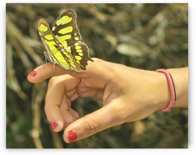 ButterflyPerchedonHandPhoto by Daniel Ferreia Leites Ciccarino