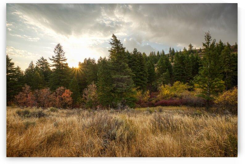 Gibson Jack Autumn Sunrise by Brian J Riley