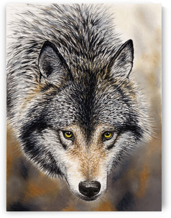 wolfcanvas by CRB