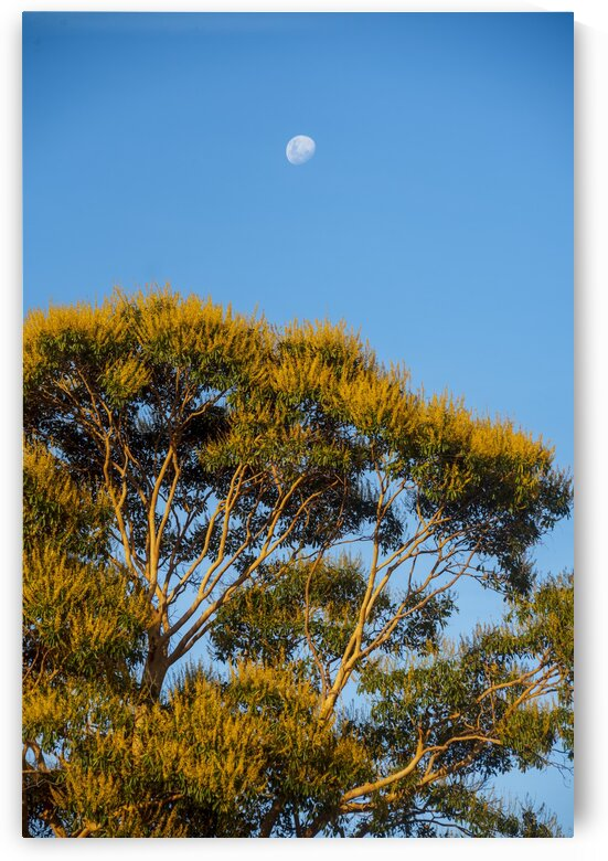 The yellow tree and the moon 2 by Augusto Miranda