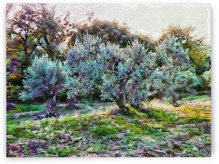 Colorful Olive Grove by Dorothy Berry-Lound