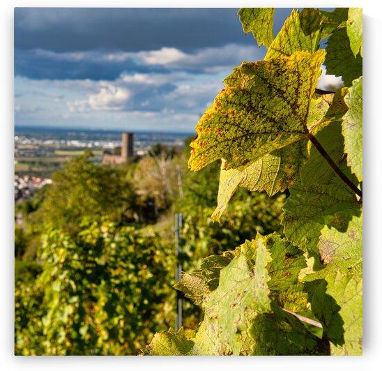 Vineyard Strahlenburg Schriesheim by Florian Emmert