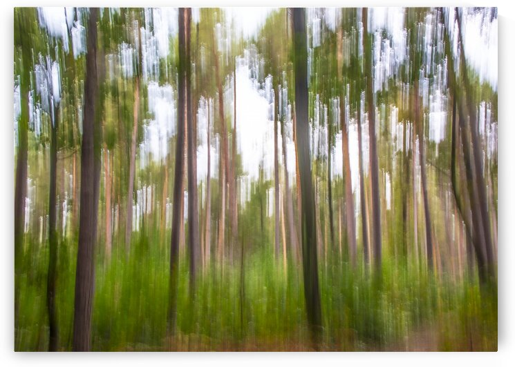 Impressions in the pine forest by Luigi Girola