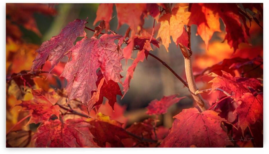 Rouge dautomne by Glenn Albert
