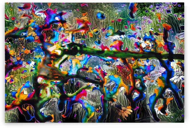 Tip Toeing Rainbows by Van Whoa