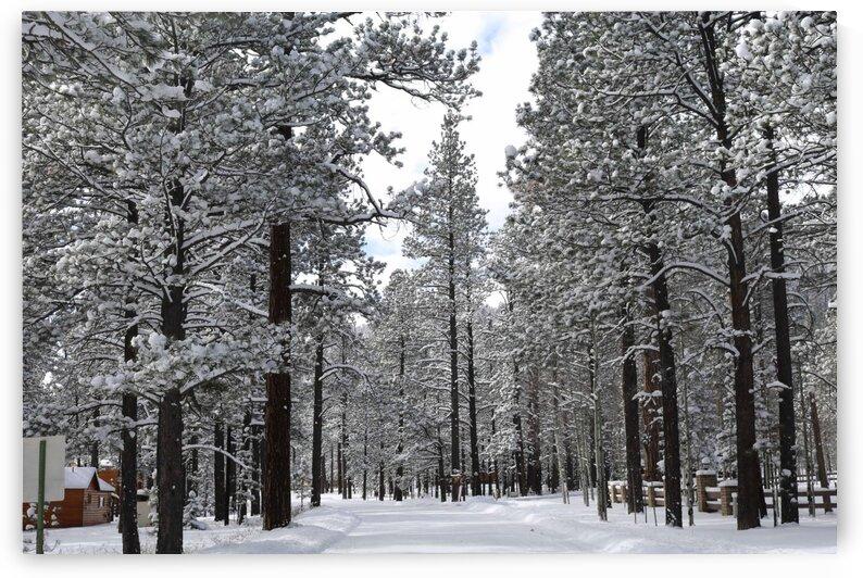 Winter Wonderland by Jenni OBrien