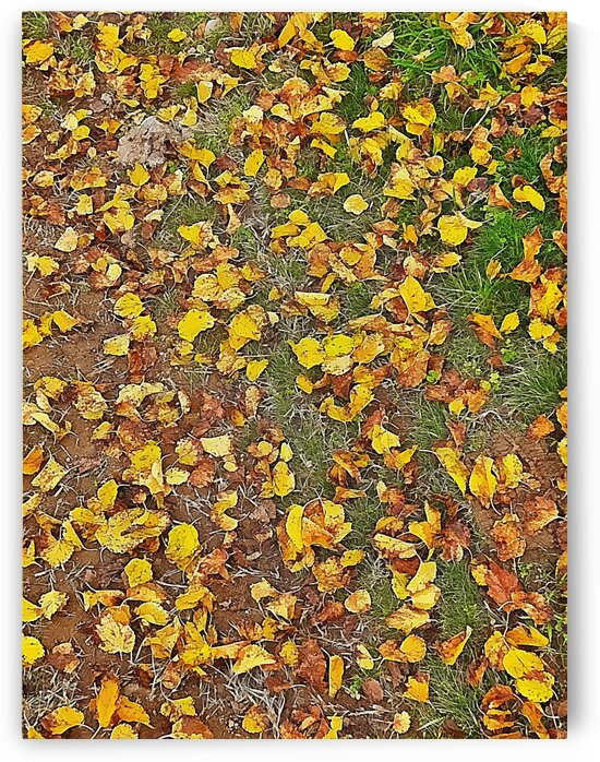 An Autumn Carpet by Dorothy Berry-Lound