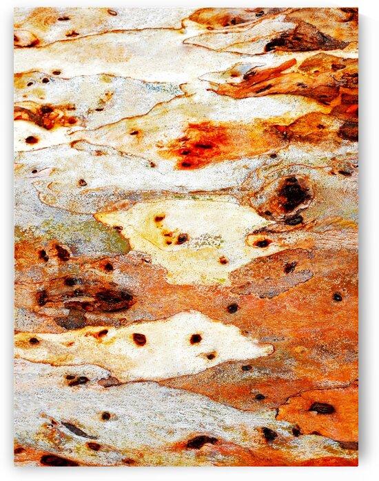 Gum Tree Bark - Mt Remarkable 7 by Lexa Harpell