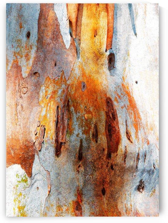 Gum Tree Bark - Mt Remarkable 2 by Lexa Harpell