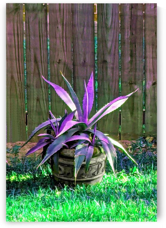 Spiky Succulent Retinted by Ellen Barron O-Reilly