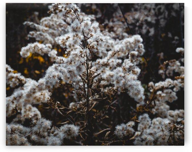 Wilde Flowers by Anansi Creative Studio