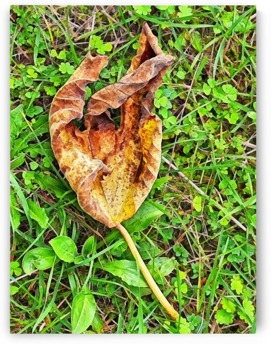 Autumn Fig Leaf Study by Dorothy Berry-Lound