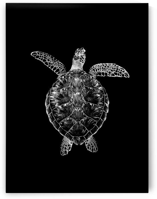 Green turtle by Arturo Baeza