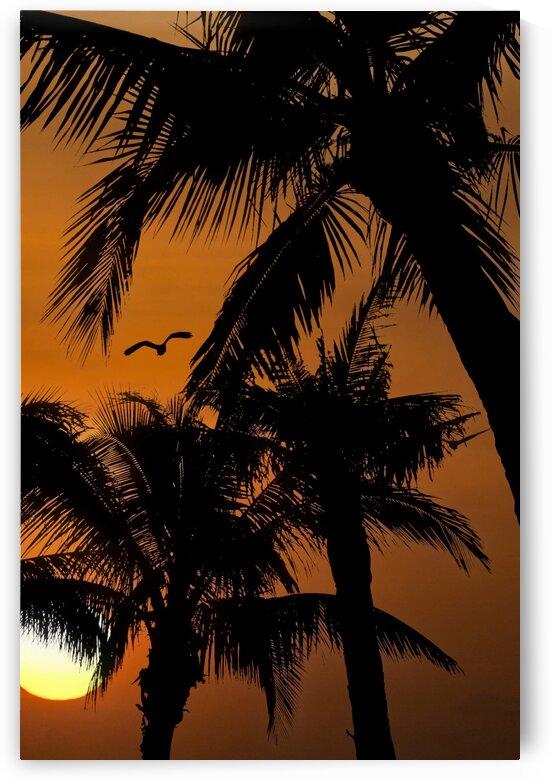 PalmSilhouette Edit by Darryl Brooks