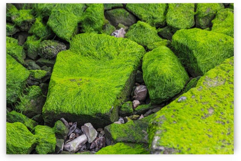 Slimey Rocks by Nicholas