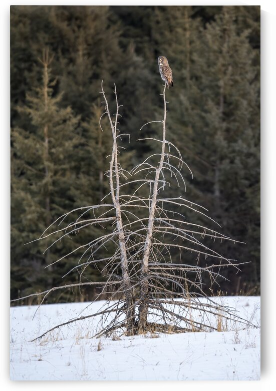 3241 - Tree Topper by Ken Anderson Photography