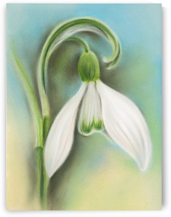 Snowdrop Single White Flower by MM Anderson