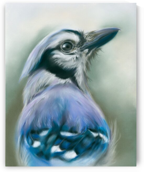 Blue Jay Songbird Portrait by MM Anderson