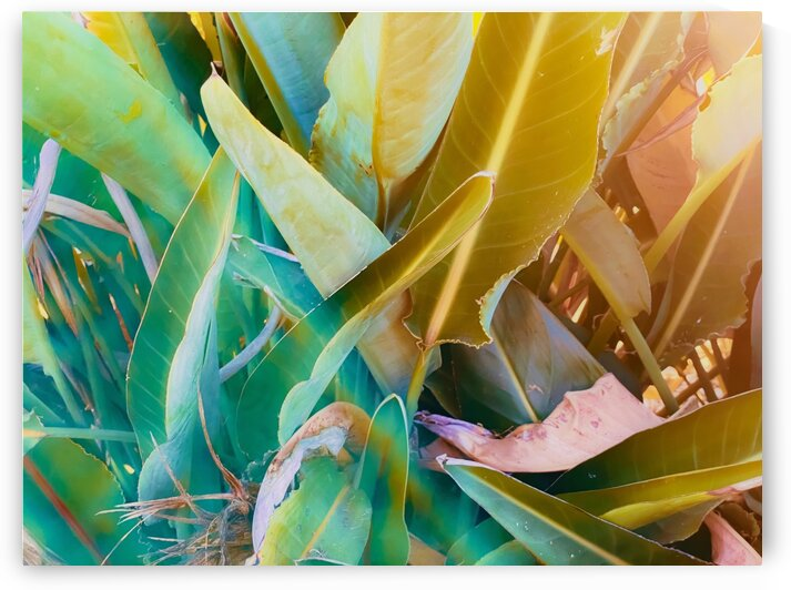 closeup green leaves bird of paradise texture background by TimmyLA