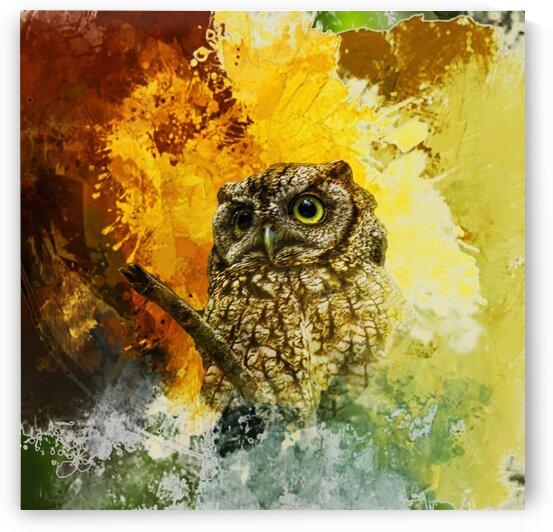 Screech Owl Mr. Grumpus by Morecraft Photography
