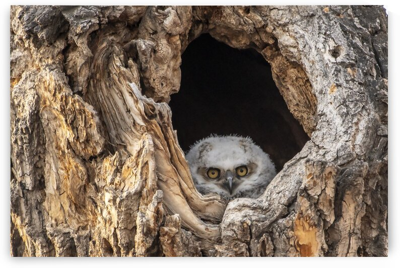 0815 - Owl Window by Ken Anderson Photography