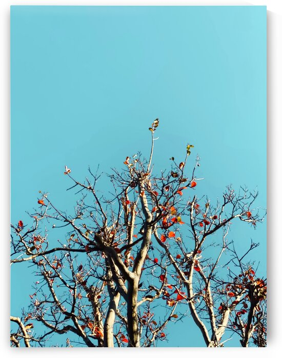 Tree branch and orange autumn leaves with blue sky by TimmyLA