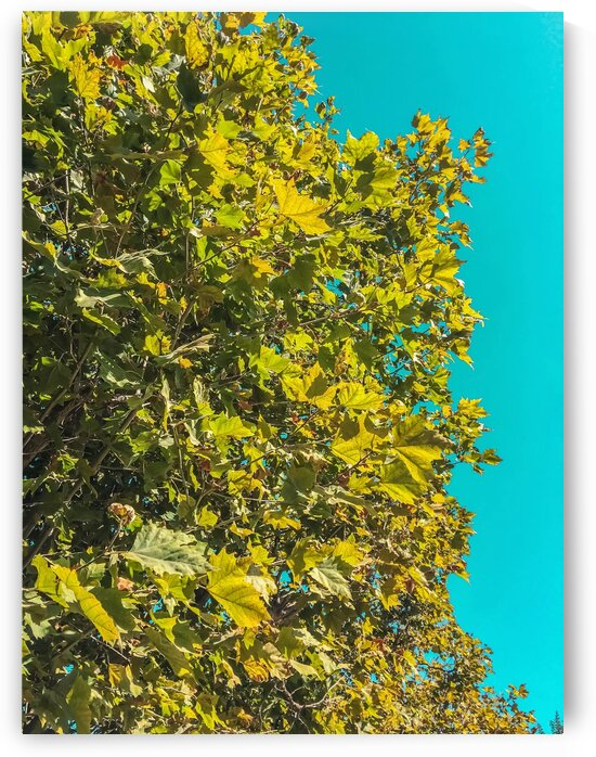 Green tree leaves with blue sky background by TimmyLA