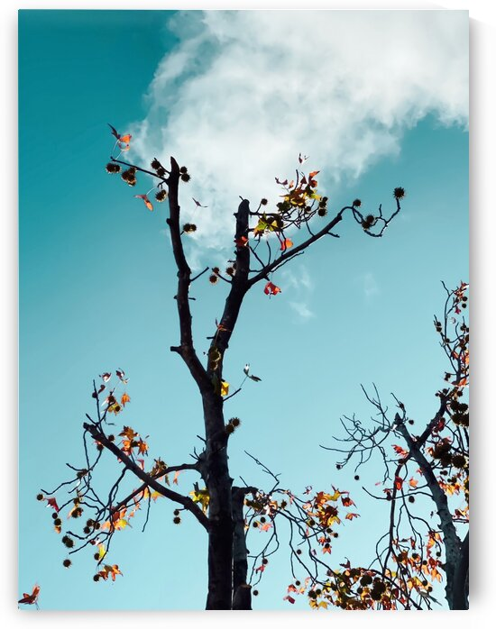 Tree branch and orange autumn leaves with blue sky background by TimmyLA