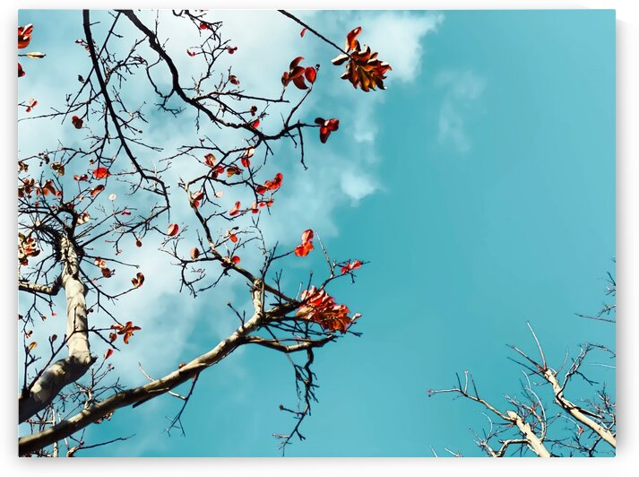 Tree branch with orange autumn leaves and blue sky background by TimmyLA