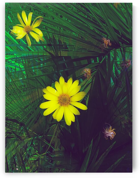 Blooming yellow flowers with green palm leaves background by TimmyLA