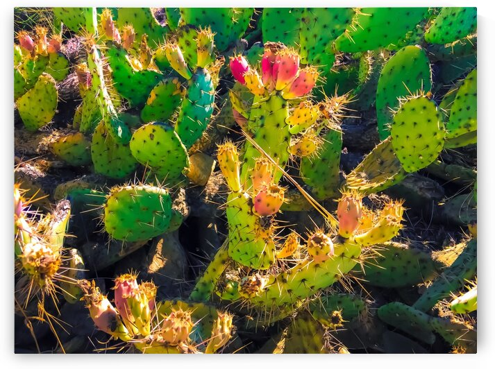 Closeup green and pink cactus garden texture background by TimmyLA