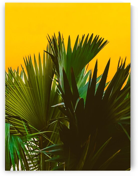 Closeup green tropical palm leaves with yellow background by TimmyLA