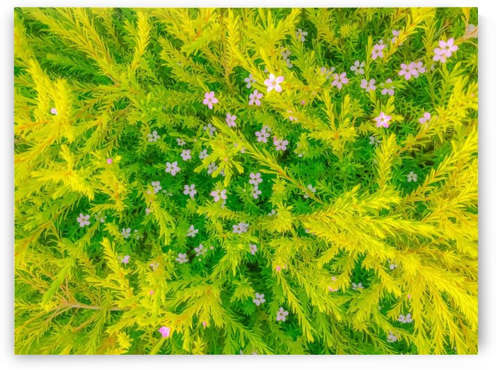 Blooming pink flowers garden with green leaves background by TimmyLA