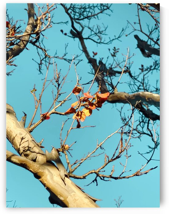 Tree branch with orange autumn leaves and blue sky by TimmyLA
