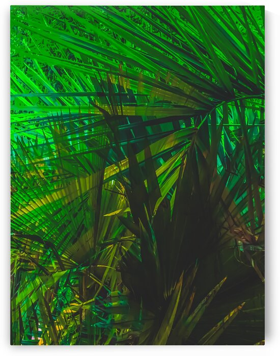 Closeup green palm leaves texture abstract background by TimmyLA
