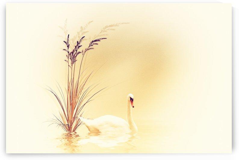 White Swan by Dagmar Marina
