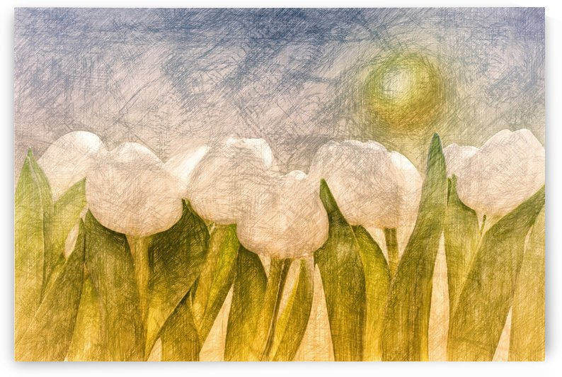 weise Tulpen  by Dagmar Marina
