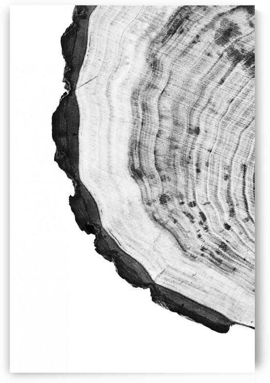 Tree ring 9 by Actarus Studio