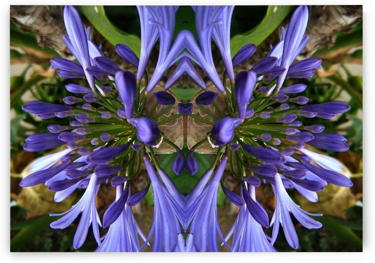 flower3 by Carlos Manzcera