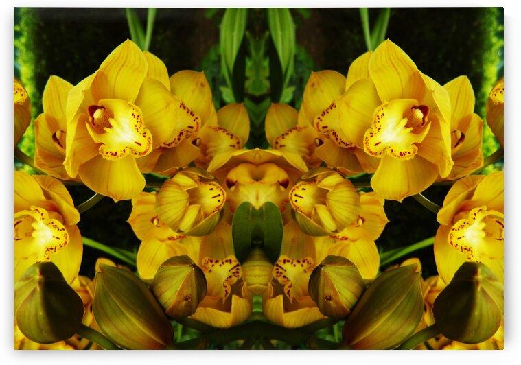 flower65 by Carlos Manzcera