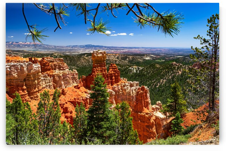 Bryce Canyon View by David C  Hintz