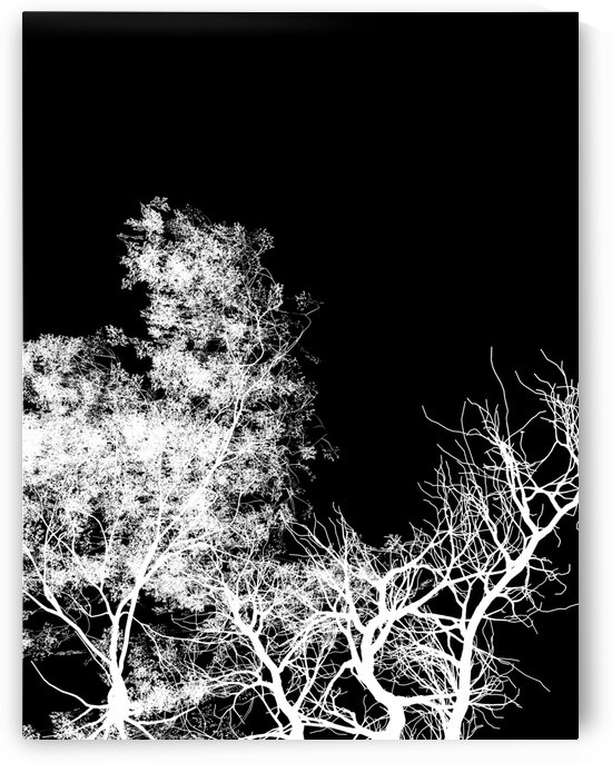 Trees in the chiaroscuro by Simple Art