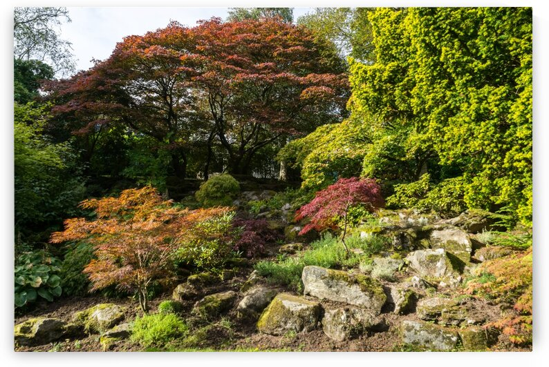 Multicolored Hillside - Foliage Melange in Reds and Greens by GeorgiaM