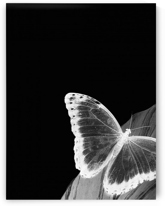 The white butterfly by Simple Art